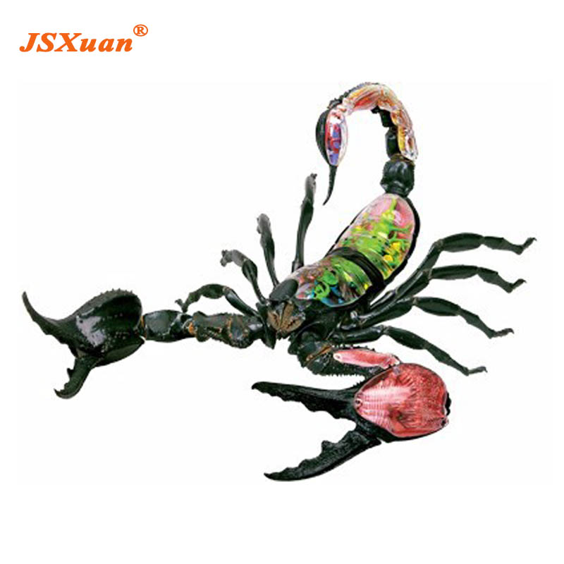 JSXuan 4D Master Vision Scorpion Model ANATOMY MODEL dissection ...