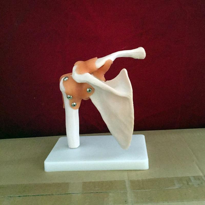 Vida tamaño Master Anatomía Humana esqueleto modelo anatómico para ...
