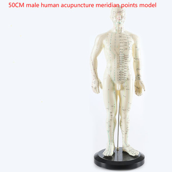 цена на Human English-Chinese body acupuncture point model meridian model of acupuncture points 26cm/ 48cm/50cm for male and female