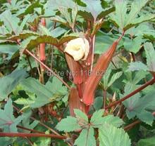 (Mix minimum order $5)1 original pack 10pcs seeds Red Okra Seeds Gumbo Tonifying Kidney Vegetable For Garden Free Shipping