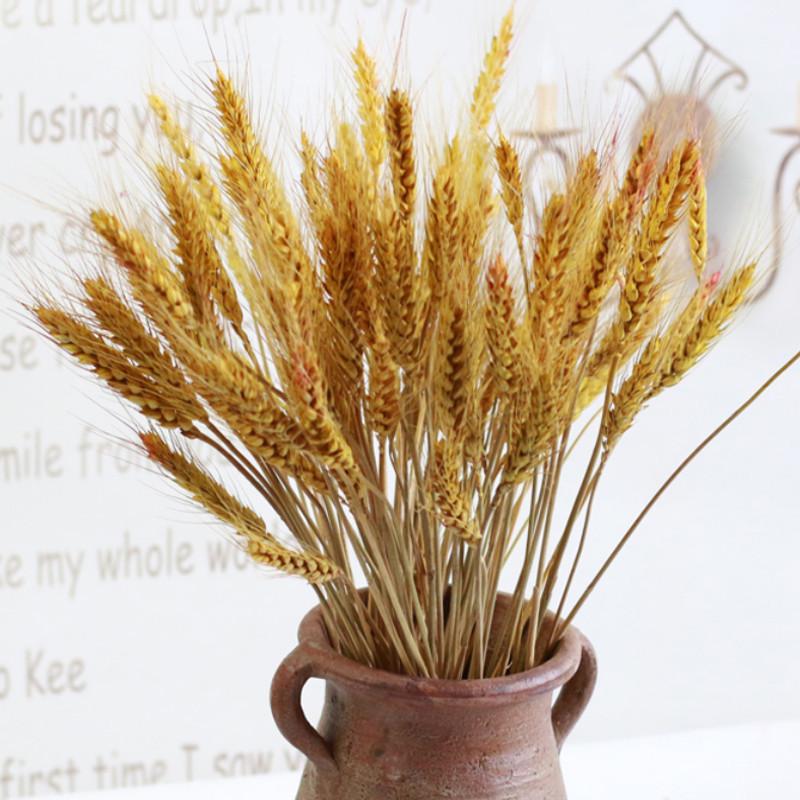 Online Get Cheap Planta De Trigo Aliexpress