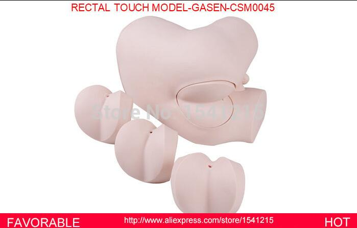 HUMAN ANATOMY MEDICAL ORGAN NURSING MODEL MEDICAL TRAINING MANIKINS MEDICAL SIMULATION MODELS RECTAL TOUCH MODEL-GASEN-CSM0045 недорго, оригинальная цена