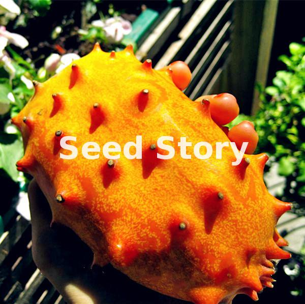 Hot Selling* Organic Kiwano Melon Seeds Nutrrtutious Vegetable Seeds Diy Home Garden Free Shipping 100pcs
