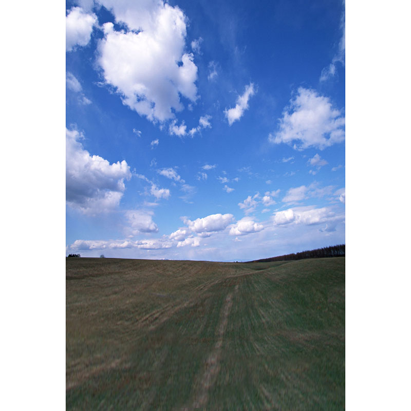 Seamless Vinyl Photography Backdrop Green Wild Blue Sky Cloud Computer Printed Scenic Nature Backgrounds for Photo Studio F-3164 photo vinyl backdrop top promotion studio photography backgrounds 6 5ftx10ft 2x3m computer paint foldable free shipping