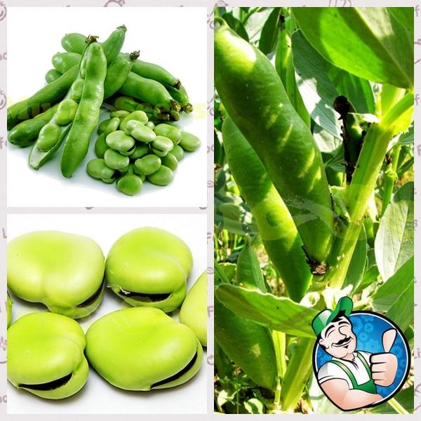 1bag=10pcs american beans seeds giant vegetables seeds no gmo pots