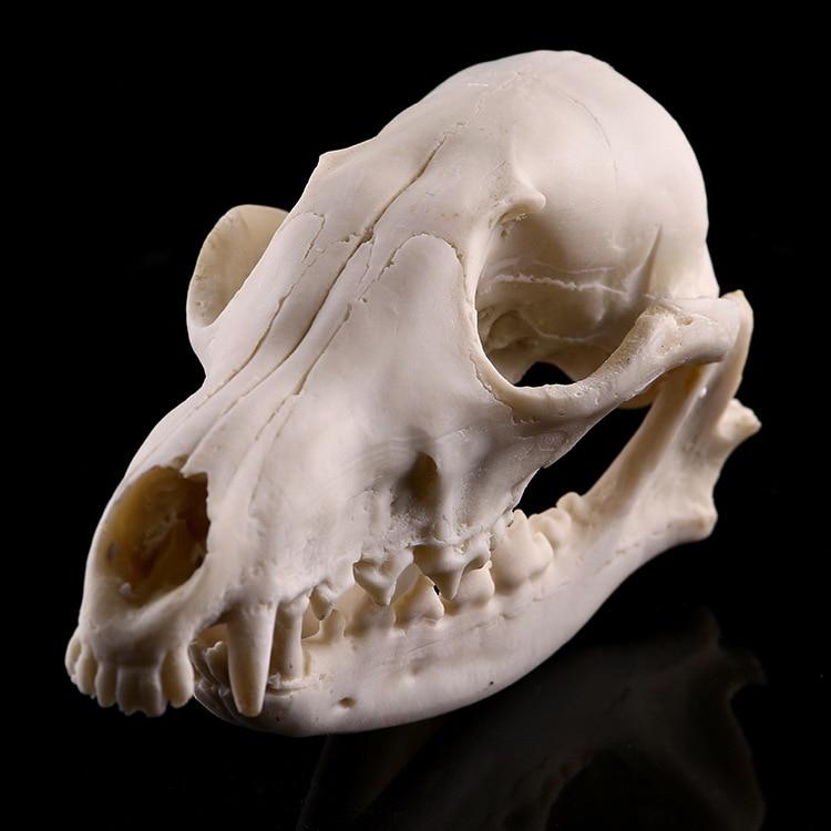 Realistic Lifelike Fox Skull Resin Replica Teaching Skeleton Model Aquarium Home Decor