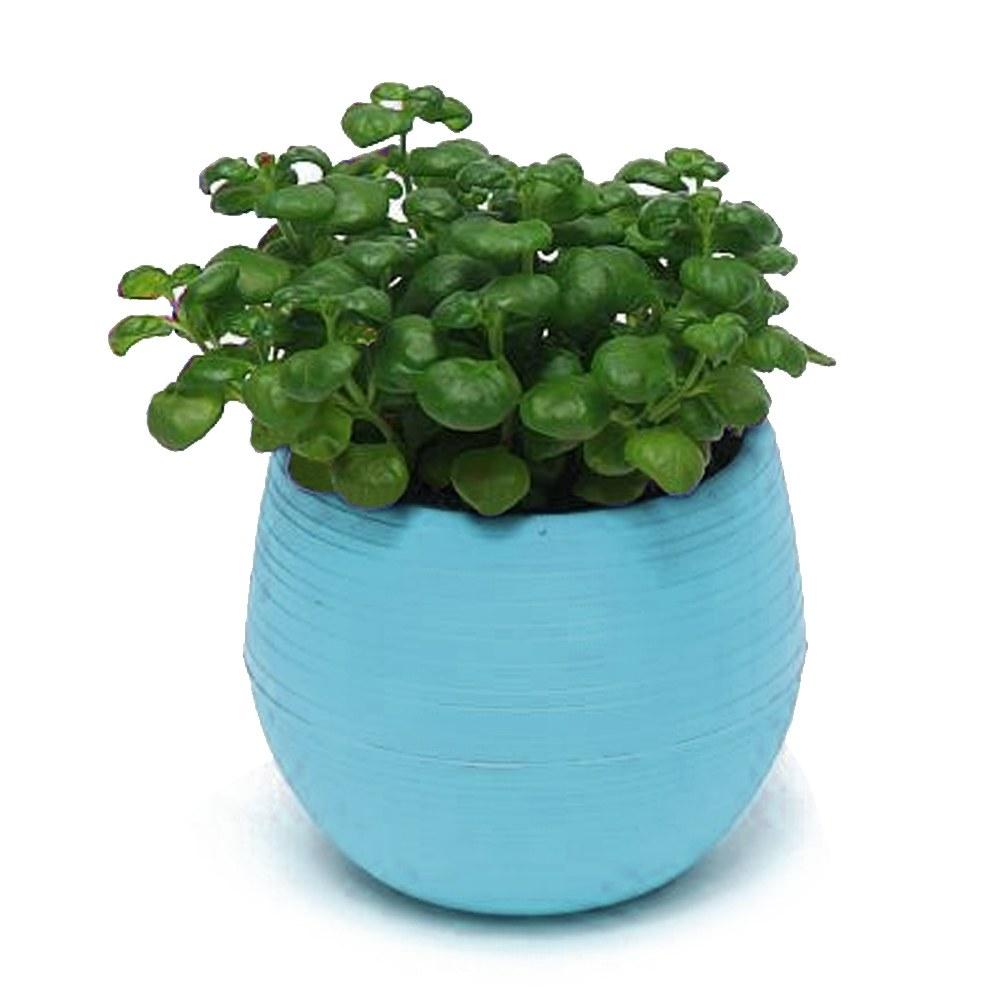 Colorful Decorative Flower Pots Gloss Plastic Plant Planter Saucer ...