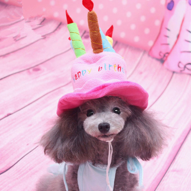 Hund Hut Glucklich Geburtstag Pet Kappe Welpen Chihuahua Pudel