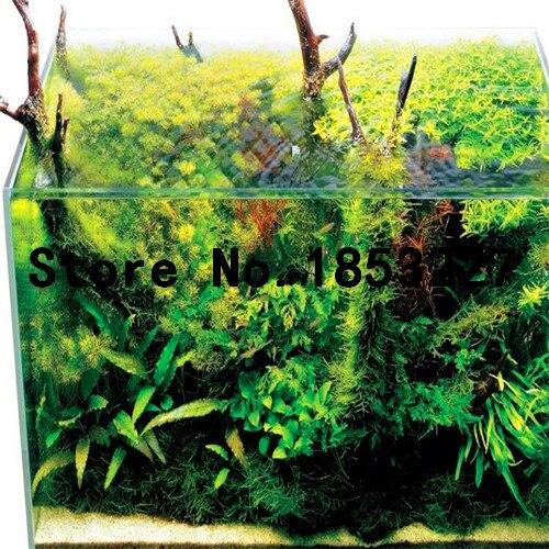 яванский мох живой бесплатная доставка
