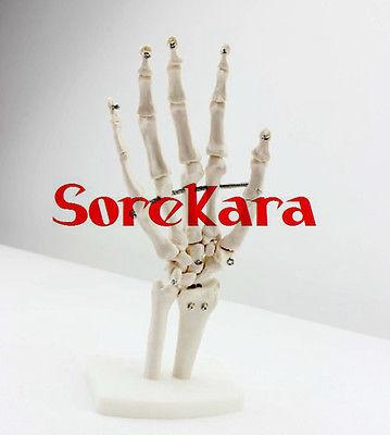 1:1 Human Anatomical Bones Joints of Hand Ulna Radius Skeleton Medical Model 1 pc fashion women men the bones of hand hairpin novelty human skeleton fluorescence harajuku hair accessories halloween gift