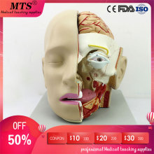 лучшая цена Human head anatomical model skull Anatomy sagittal sinus Oral nasopharyngeal medical teaching model