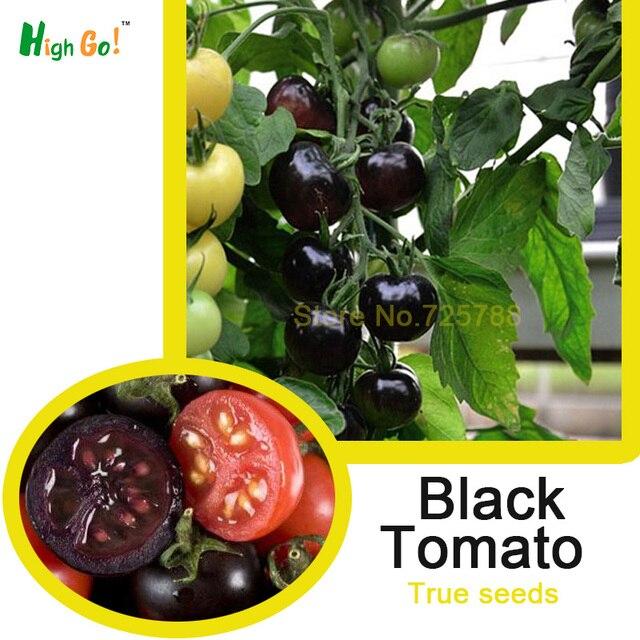 Schwarz Tomaten, Gemüsesamen, Raum Gemüse, Neue, Garten Liefert Bonsai  Pflanze Mini Tomaten