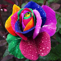 Multi-color 200 Pcs Rainbow Rose Flower Seeds Garden Plants Seeds Flower Seeds Store 243