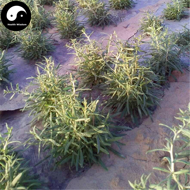 Buy Real Black Goji Berry Tree Semente 100pcs Plant Chinese Black