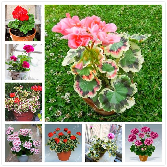 Fleurs vivaces rustiques for Plants de fleurs vivaces