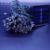 Nueva Caliente Solar Luces de Hadas de Cuerda pies 50 LED Blossom Jardines Decorativos, césped, Patio, Árboles de navidad, bodas
