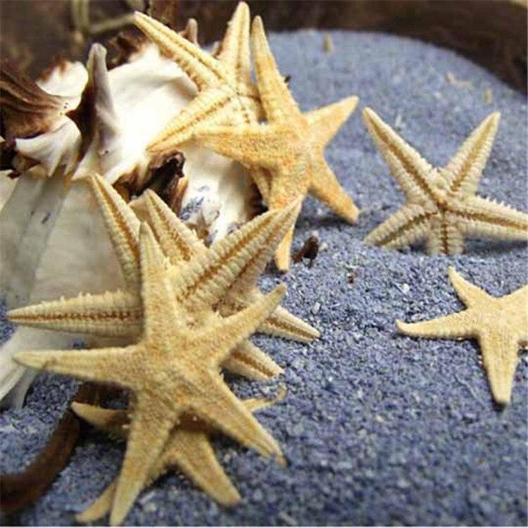 10pcs/lot 1 2cm Natural Sea Star Wishing Bottle Starfish DIY Art ...