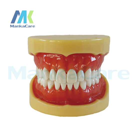 Manka Care - Removable Mode/28 pcs Tooth/Soft Gum/Wax fixed/Without Articulator Oral Model Teeth Tooth Model