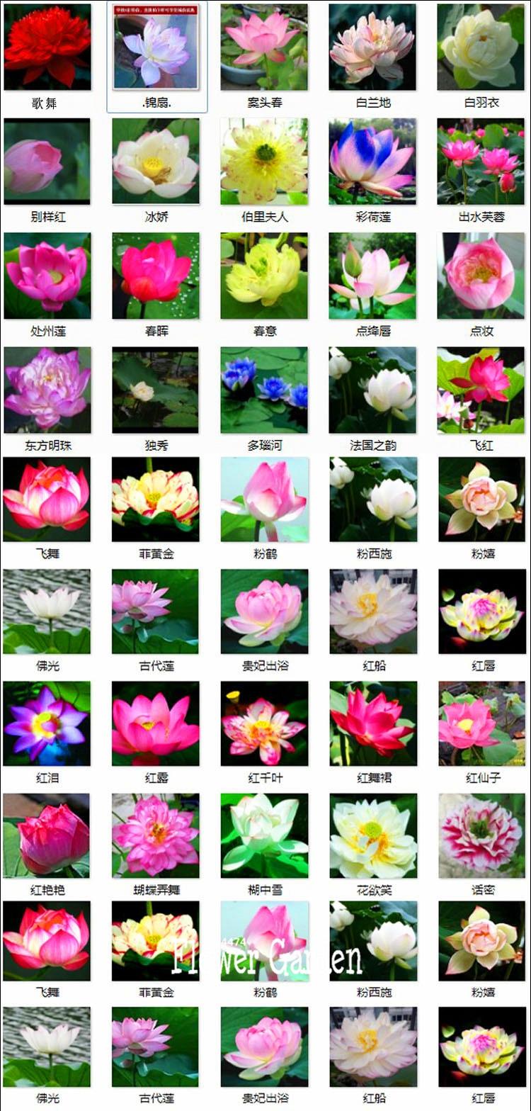 Aliexpress buy hot salecheap water lily garden bonsai aeproducttsubject izmirmasajfo