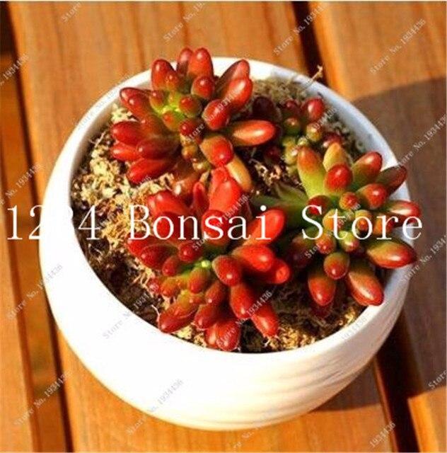 100 pz Succulente bonsai Rare Lithops Bonsai piante da Fiore di Cactus FAI DA TE Pianta In Vaso Piante da Fiori Per Il Giardino di Casa