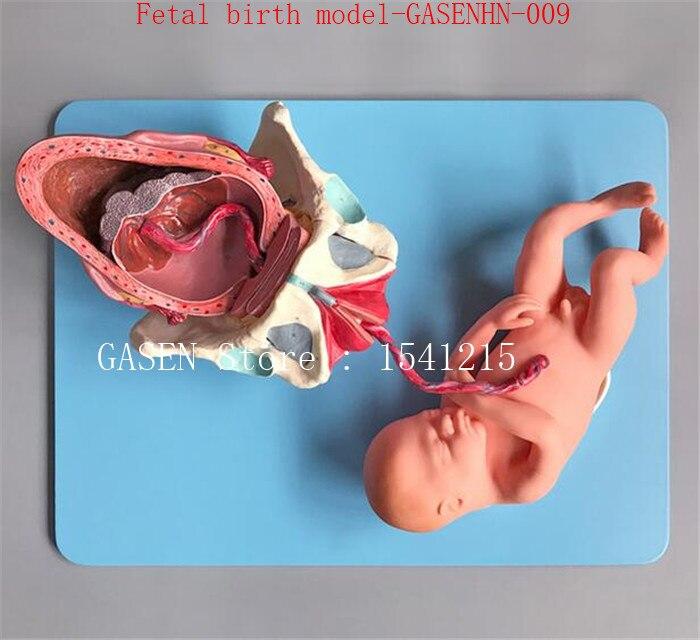 Термин плода доставки Беременность доставки Средства ухода за кожей для будущих мам акушерства научить гинекологии беременна октября плод