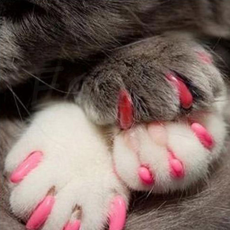 20pcs Pet Nail Protector Pet Nail Caps Cover Soft Fingernails Pet Cat Dog Pet Claw Cover Claw Protection Multicolor Color Random