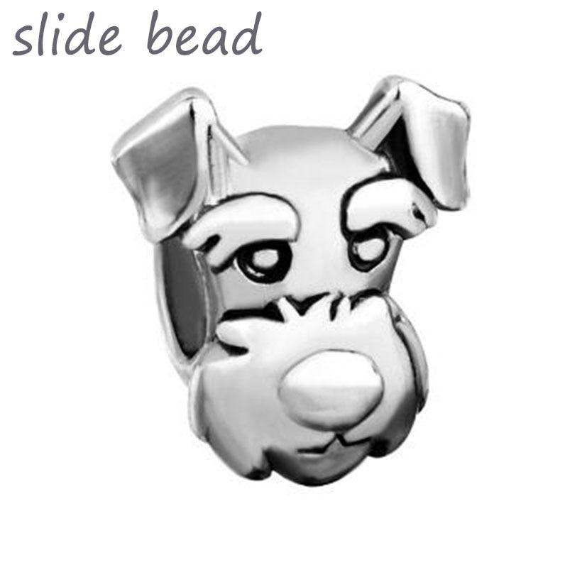 pandora dog