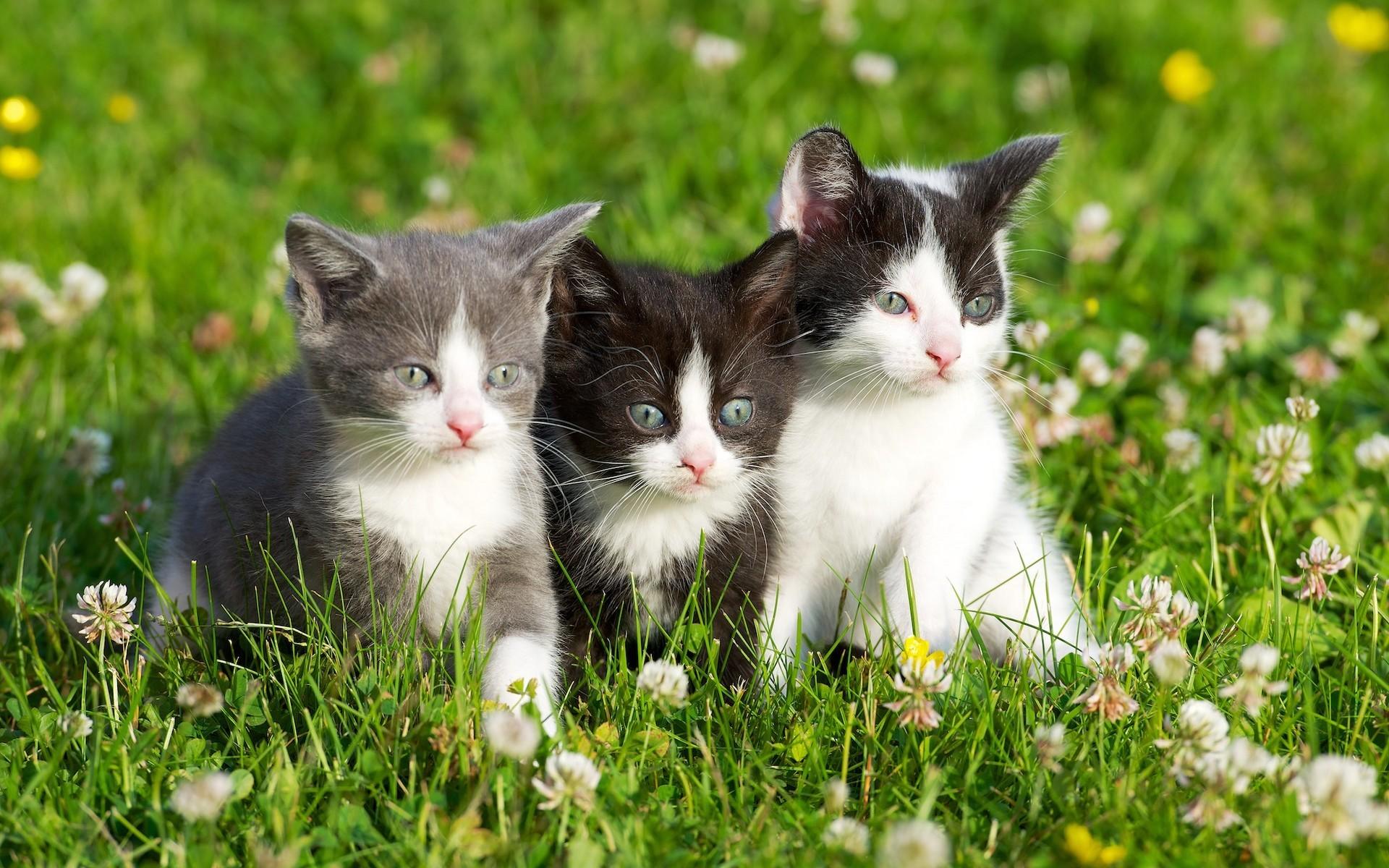 Hierba gatitos flores pequeños animales carácter sala de estar ...