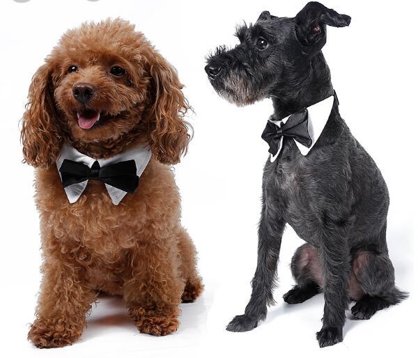10 unids pet cat dog fashion pajarita corbata de boda perrito perrito grooming t