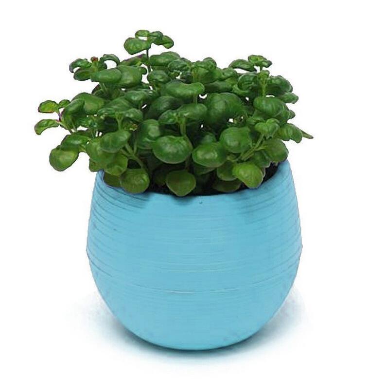 Mini Plastic Flower Pot Succulent Plant Flowerpot For Home Office ...