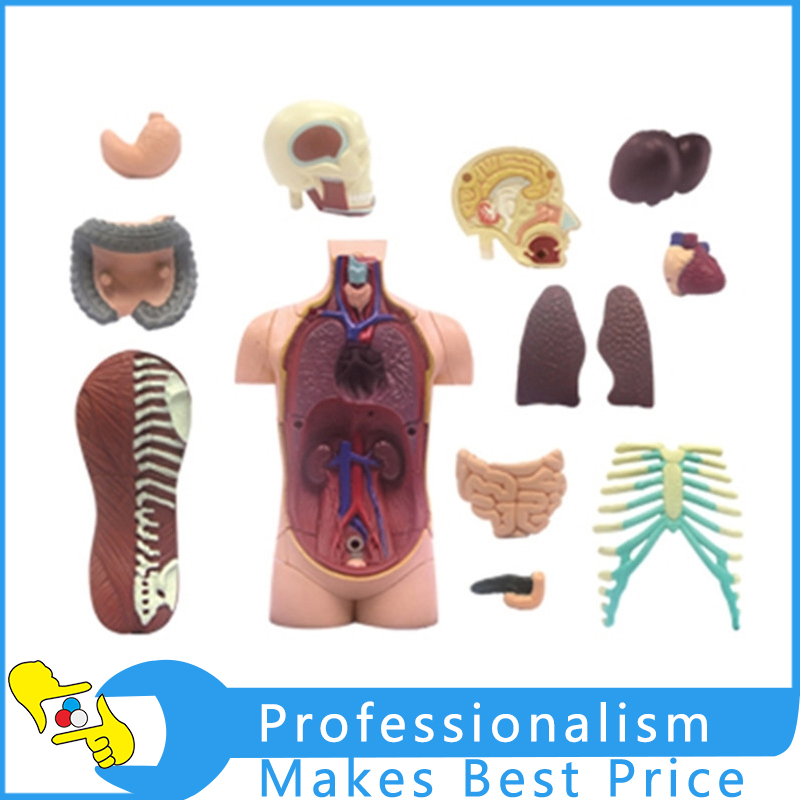 4D Master Human Torso Anatomy Body Teach Education Bust / Head / Musculoskeletal Anatomical Models Study Model 32 Parts/set human anatomy model simulation man model medical model male torso model 15 parts 28cm gasencx 0017