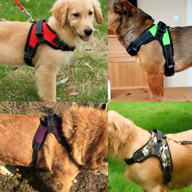 Chihuahua Reflective Dog Harness