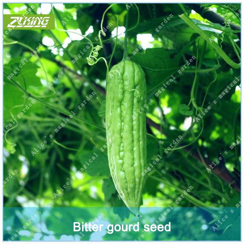 ZLKING 10 Pcs Green Balsam pear Bitter Gourd Healthy Food Rich In Nutrition For Farm Garden Planting Organic Vegetable