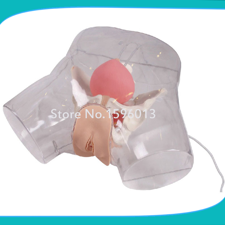 Transparent Female Catheterization Model, Urinary Catheterization Trainer transparent female catheterization simulator urinary catheterization model