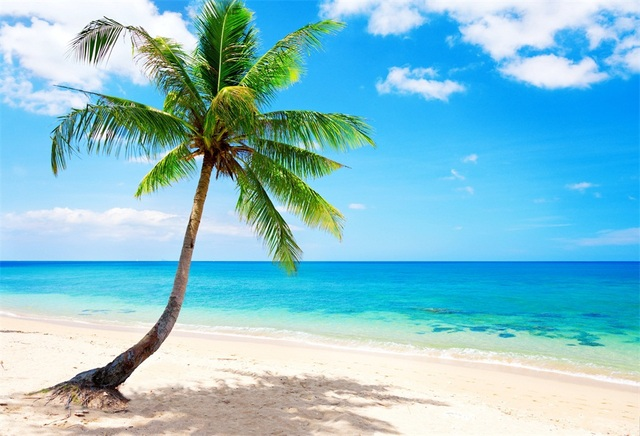 Laeacco Summer Blue Sky Sea Beach Palm Tree Scenery