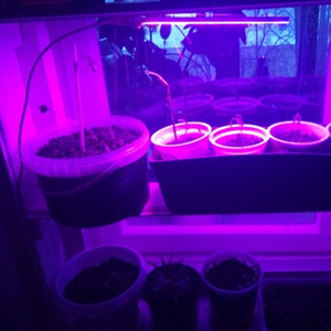 Image 5 - AIFENG Led 성장 빛 전체 스펙트럼 레드 블루 5V USB 성장 조명 유연한 호스 3W 5W 묘목 꽃 식물 성장 빛