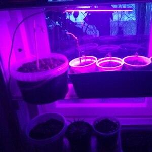 Image 5 - AIFENG Led Grow Light Full Spectrum Red Blue 5V USB Grow Lights Flexible Hose 3W 5W For Seedlings Flowering Plants Growing Light
