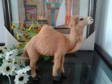 simulation brown camel toy polyethylene & furs 22x19cm camel  model , home decoration gift t314