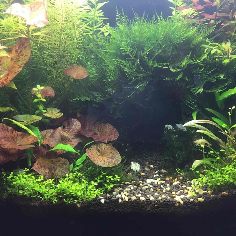 Aquarium fish tank landscaping water aquarium gras modder for Amazon fish tank