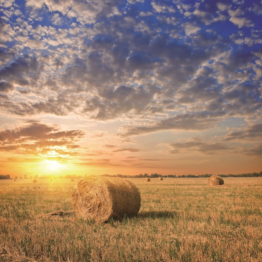Laeacco Sunset Rural Farm Field Hay Bale Scenic Photographic Backgrounds Customized Photography Backdrops For Photo Studio