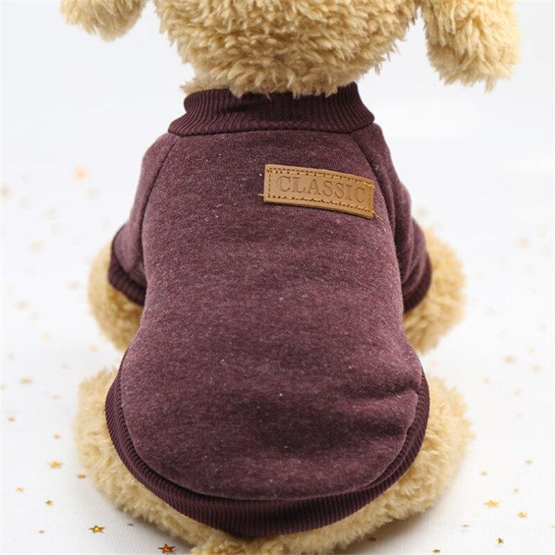 Pet, Poodle, York, Warm, Dog, For