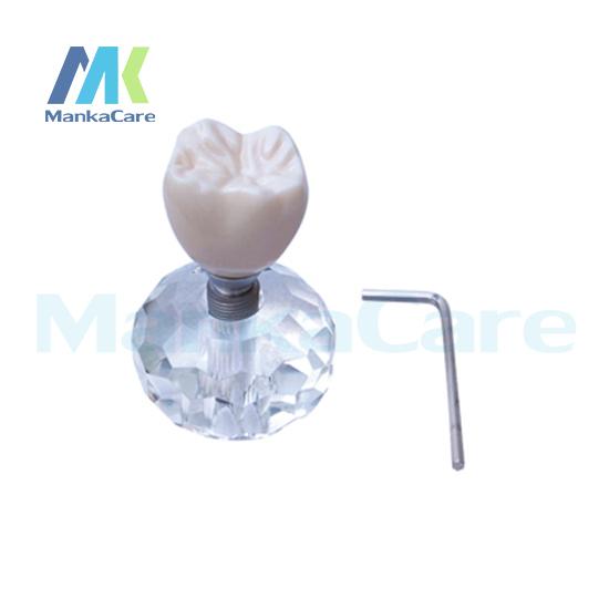 Manka Cuidar-Novo Modelo de Implante (Três Partes) Oral Modelo Dente Dentes Modelo