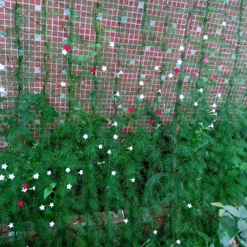 Нейлоновая сетка для сада, сетка для забора растений, рама для альпинизма, садовая сетка, ограда из растений, защита от птиц, сетчатая сетка Ограждение, шпалеры и ворота      АлиЭкспресс