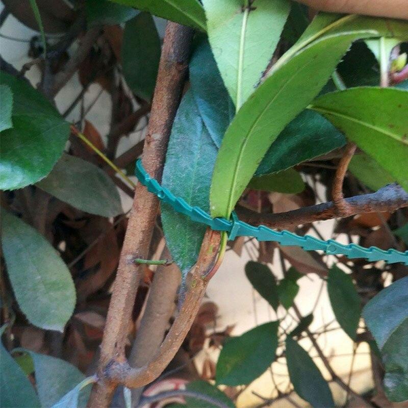 50Pcs Self Locking Plant Cable Ties Fish Bone Spur Shape Plastic 17x0.7cm Adjustable Reusable Garden Tools Garden Tree Climbing