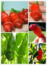 Hot Sale!100% Genuine Fresh Rare Vegetable Penis Pepper Bonsai Paprika Home Garden Seasons Chili Plant Terrace Potted 120 PCS