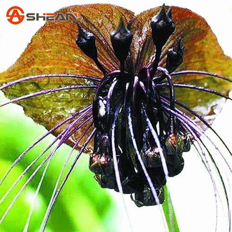 Acquista all 39 ingrosso online semi di orchidea per la for Semi orchidea