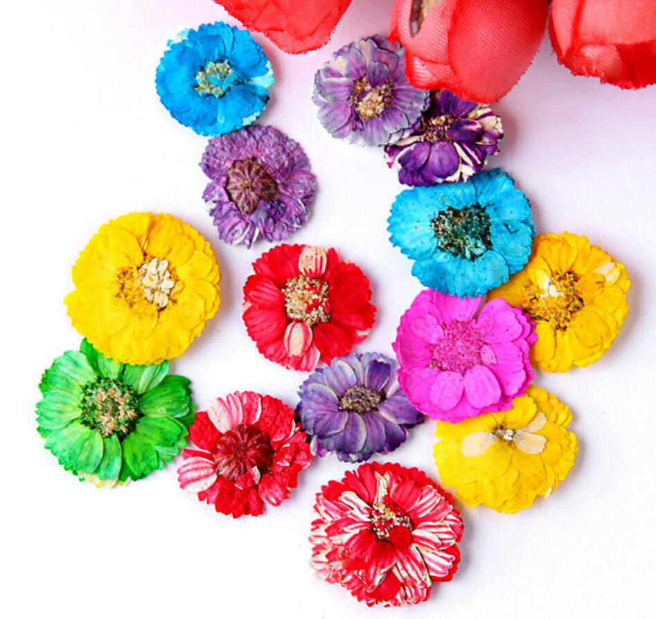 100pcs Pressed Dried Hibiscus Flower For Wedding Party Home