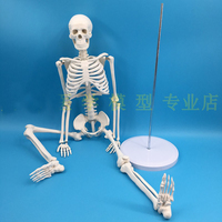85cm Full Body Skeleton Mannequin Human Skeleton Model Medicine Teaching Model Spine Free Shipping