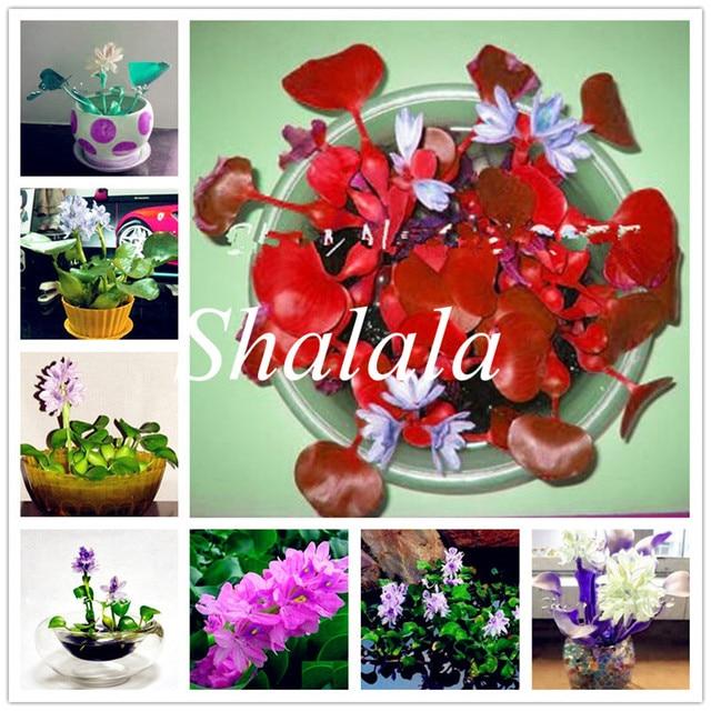 100 Pcs Water Hyacinth Bonsai Lotus Water Hyacinth Plants Water Gourd Potted Floating Pond Aquarium Lotus Fissidens Fontanus