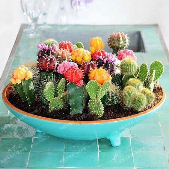 Multifarious Ornamental Plants 100 Mixed Cactus Bonsai Attractive Impressive  100%NATURAL Home & Garden Bonsai Plants